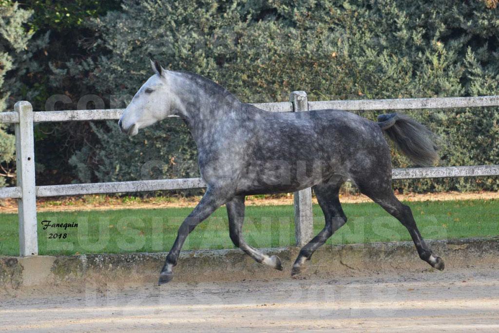 Confirmation de chevaux LUSITANIENS de Novembre 2018 - JANIA SAINT SAUVEUR