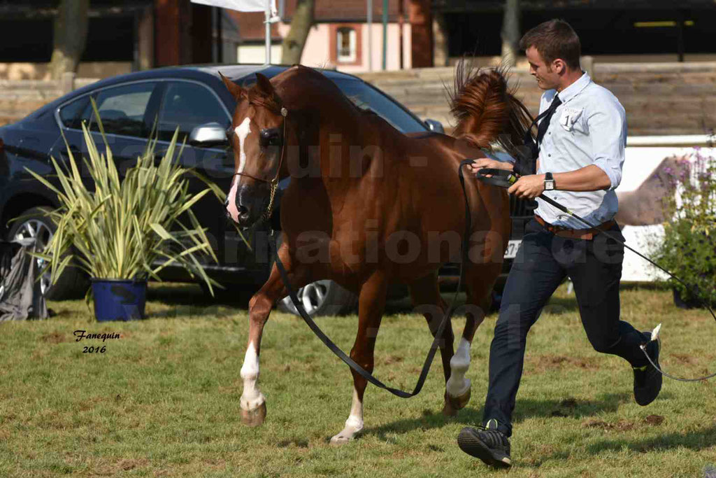 International Arabian Horse Show B de VICHY 2016 - DZHARI NUNKI - Notre Sélection - 43