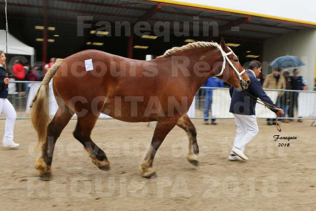 Concours Régional OCCITANIE de chevaux de traits à REQUISTA - DIANE DE GRILLOLES - 7