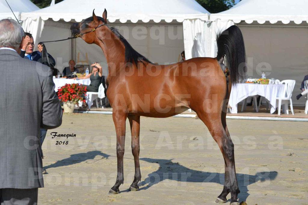 Championnat de FRANCE de chevaux Arabes à Pompadour en 2018 - BO AS ALEXANDRA - Notre Sélection - 42