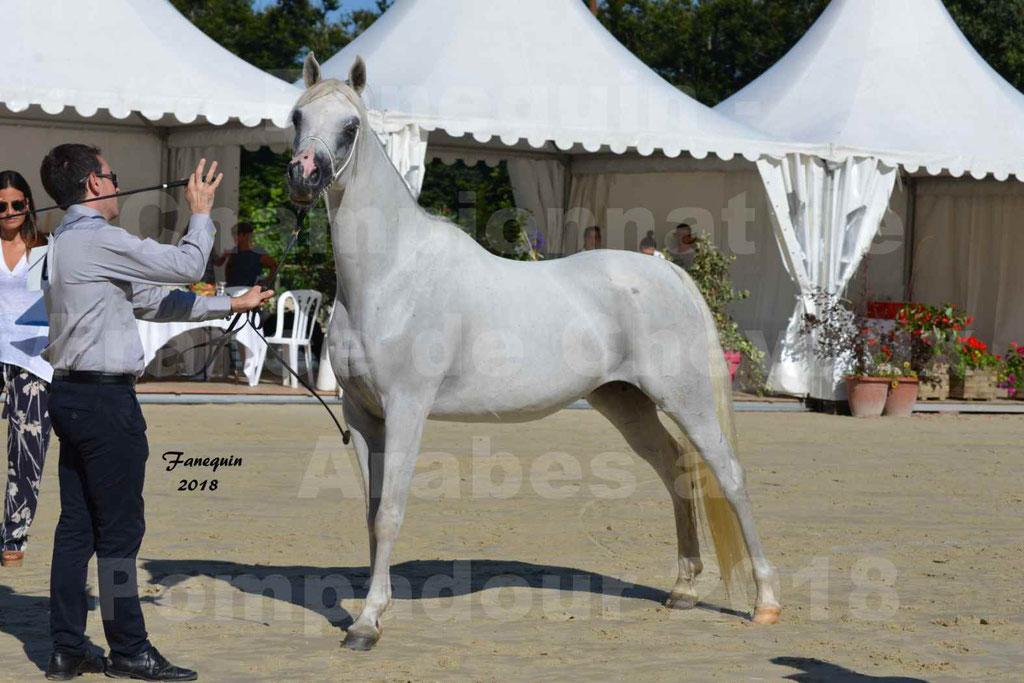 Championnat de FRANCE de chevaux Arabes à Pompadour en 2018 - ESTALIA - 35