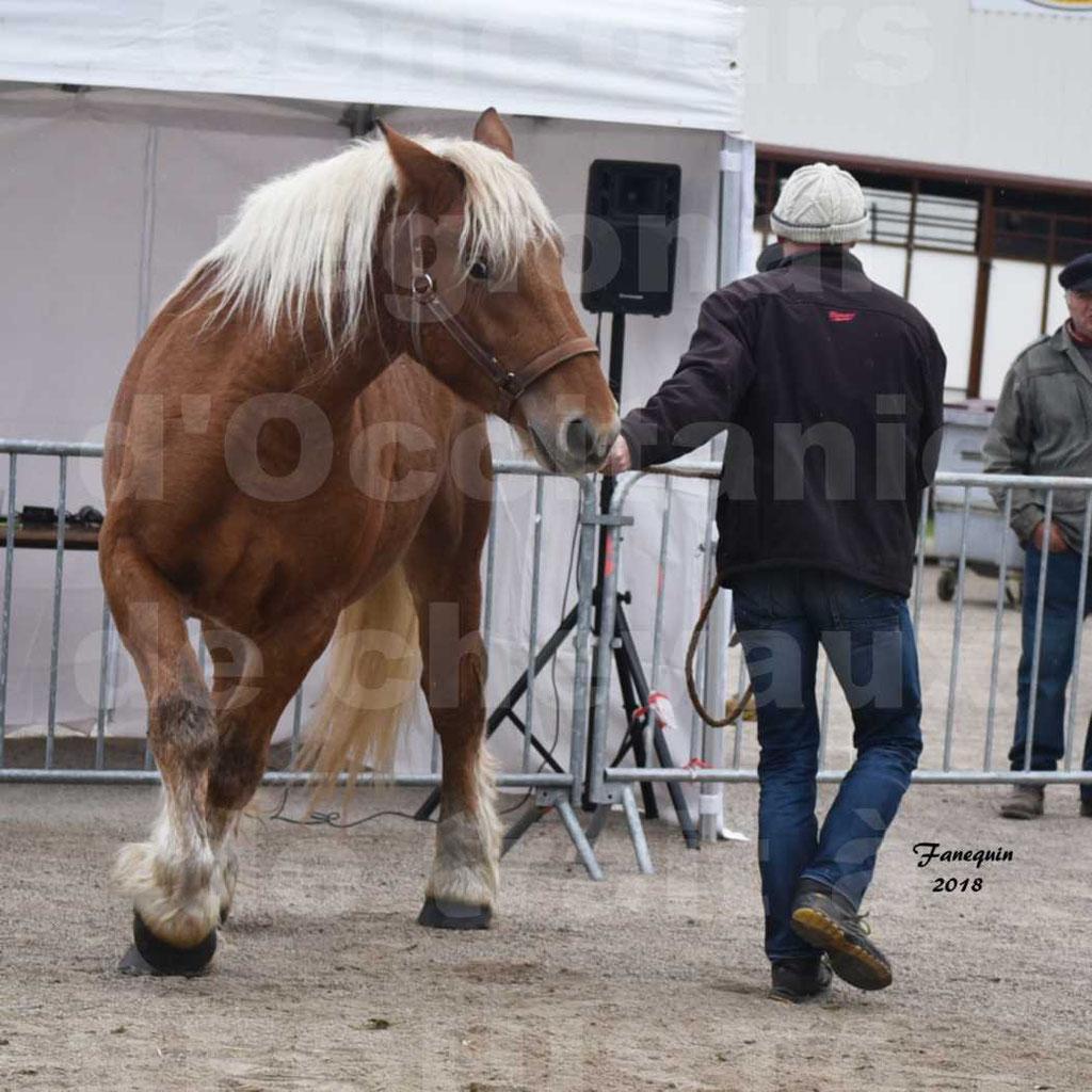 Concours Label Loisirs lors du concours Régional de chevaux de traits à REQUISTA en Octobre 2018 - 10