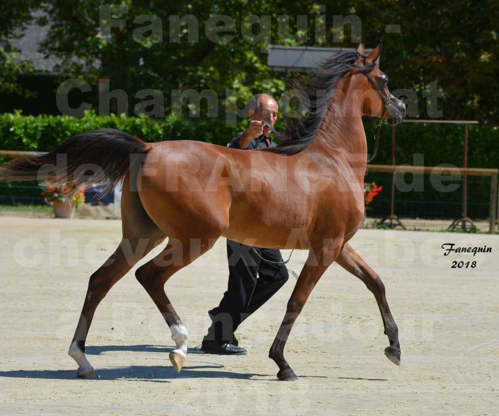 Championnat de FRANCE des chevaux Arabes à Pompadour en 2018 - SH CHARISMA - Notre Sélection - 28