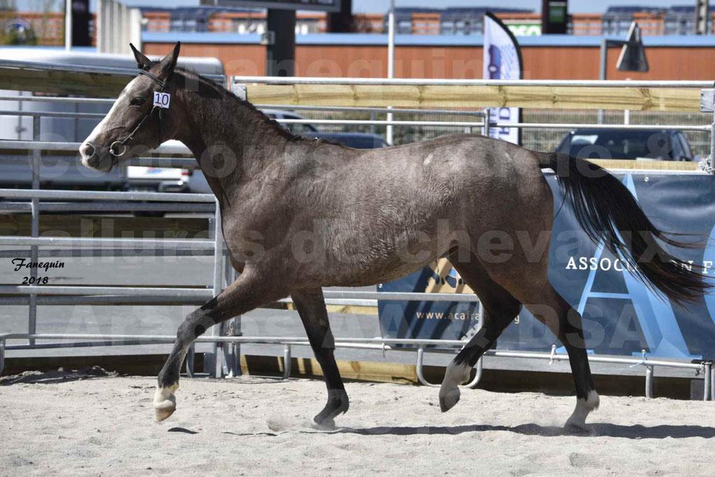 Concours d'élevage de Chevaux Arabes - Demi Sang Arabes - Anglo Arabes - ALBI les 6 & 7 Avril 2018 - GOLD OF MARTRETTES - Notre Sélection - 05