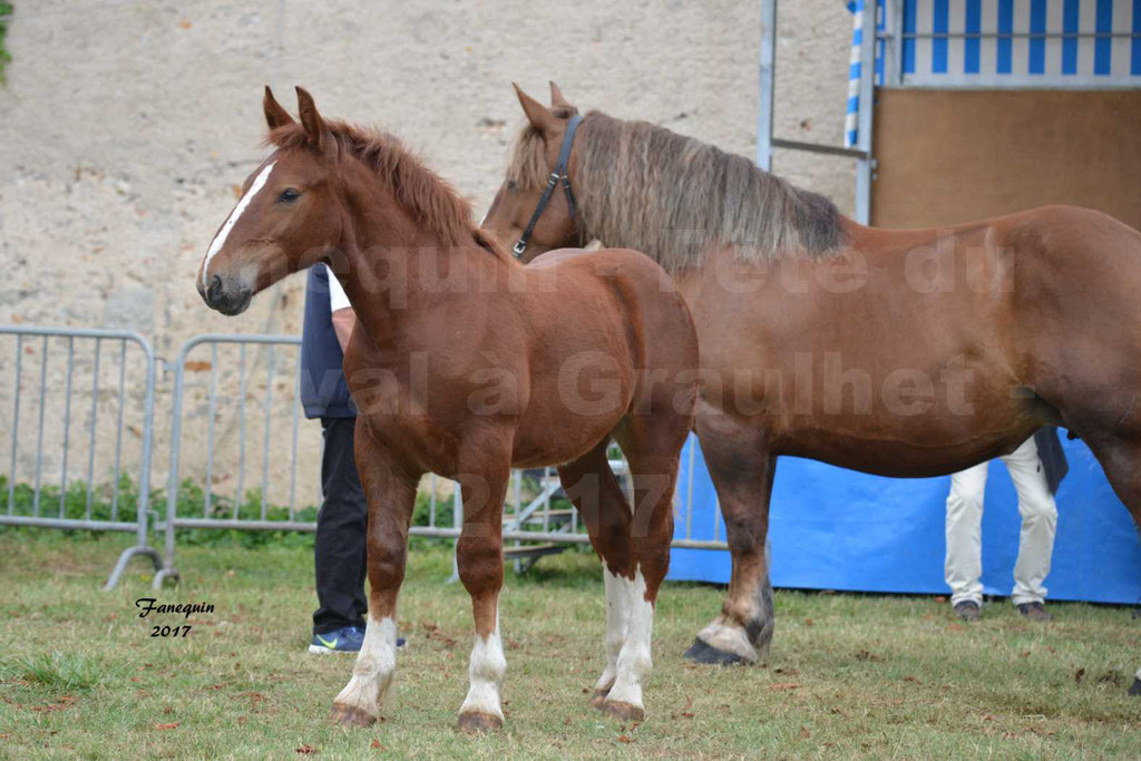 Fête du cheval à GRAULHET le 17 Septembre 2017 - Concours départemental de chevaux de trait - 2