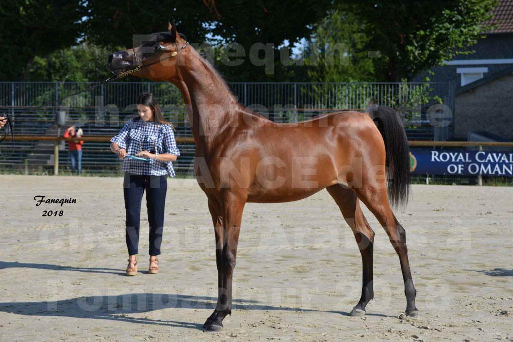Championnat de FRANCE de chevaux Arabes à Pompadour en 2018 - BO AS ALEXANDRA - Notre Sélection - 49