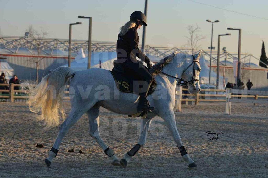 Cheval Passion 2016 - Présentation extérieure de chevaux Arabes montés - 15