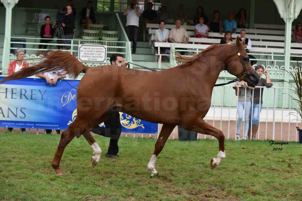 International Arabian Horse Show B de VICHY 2016 - DZHARI NUNKI - Notre Sélection - 08