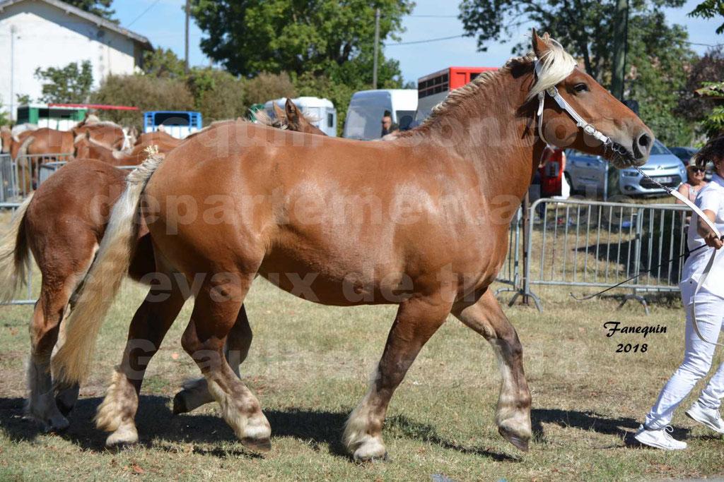Concours départemental de chevaux de traits à GRAULHET en 2018 - Elevage POUJADE - Notre Sélection - 13