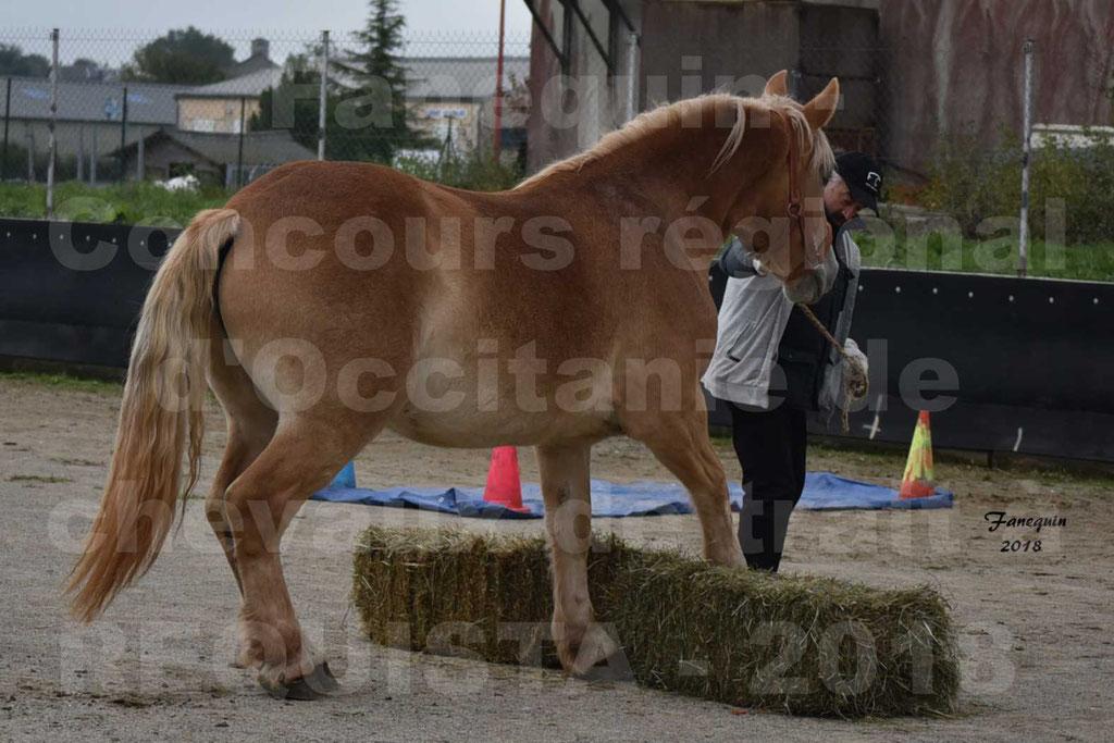Concours Label Loisirs lors du concours Régional de chevaux de traits à REQUISTA en Octobre 2018 - 50