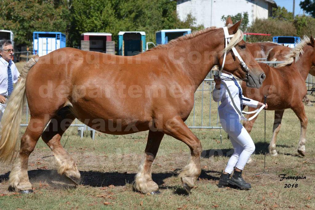 Concours départemental de chevaux de traits à GRAULHET en 2018 - Elevage POUJADE - Notre Sélection - 18