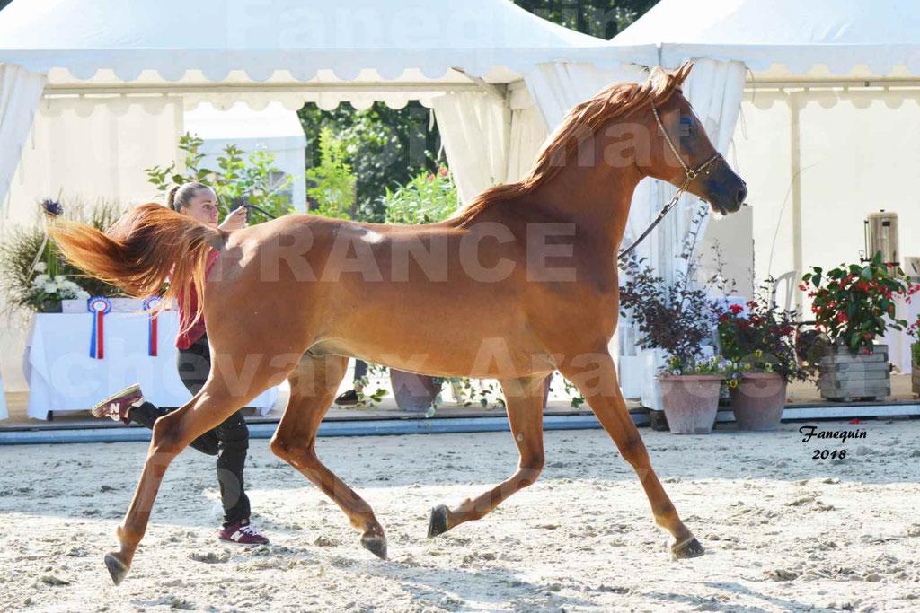 Championnat de FRANCE de chevaux Arabes à Pompadour 2018 - MAAMAR ISHANE - Notre Sélection - 05
