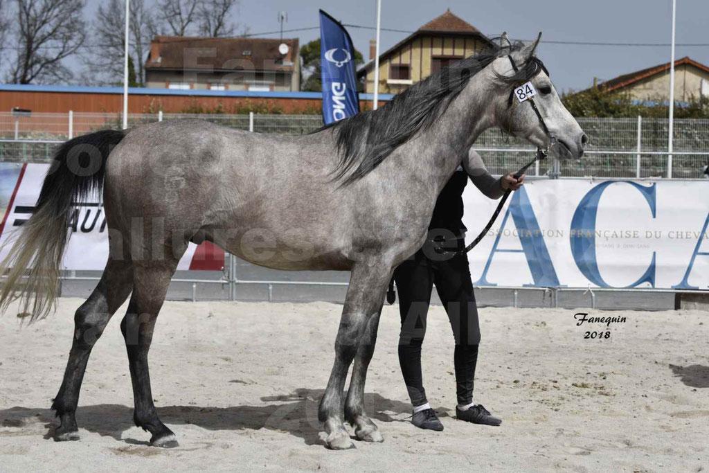 Concours d'élevage de Chevaux Arabes - Demi Sang Arabes - Anglo Arabes - ALBI les 6 & 7 Avril 2018 - FLORAC LARZAC - Notre Sélection - 7