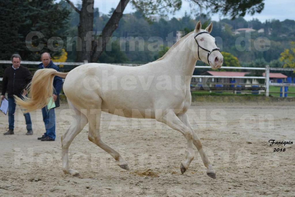 Confirmation de chevaux LUSITANIENS aux Haras d'UZES Novembre 2018 - LOLIBLOU - 35