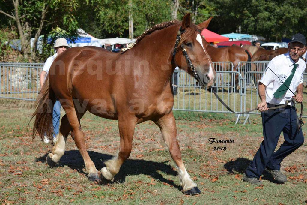 Fête du cheval à GRAULHET le 16 septembre 2018 - Concours Départemental de chevaux de traits - 04