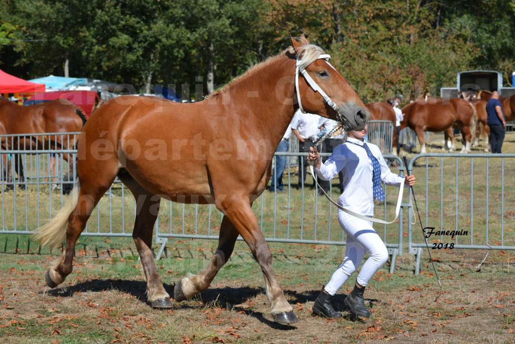Concours départemental de chevaux de traits à GRAULHET en 2018 - Elevage POUJADE - Notre Sélection - 08