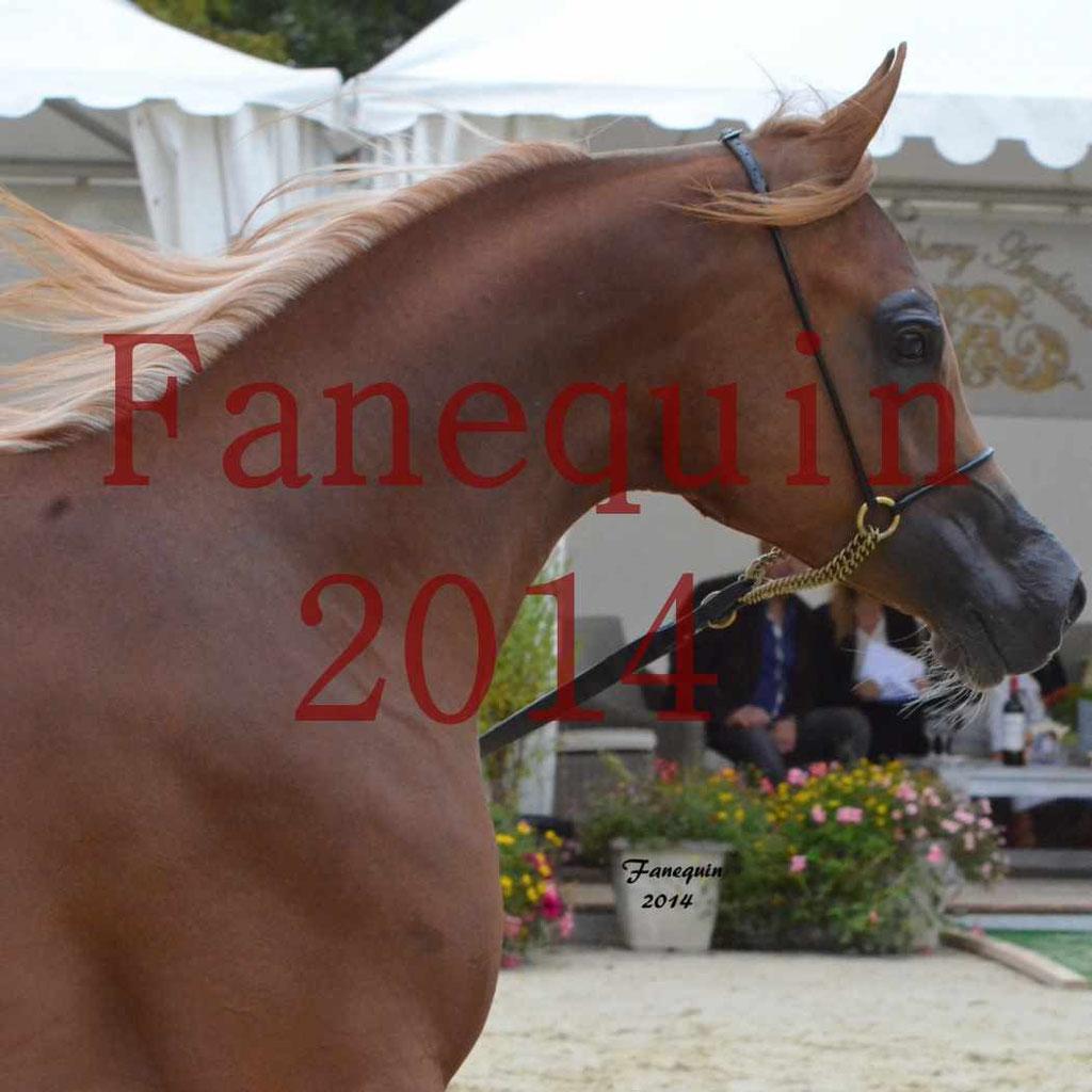 Championnat de FRANCE 2014 à pompadour - AMJA AL ADEYAT - 3