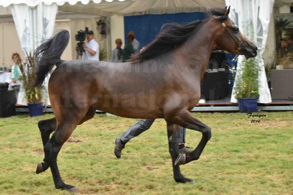 International Arabian Horse Show B de VICHY 2016 - MILLIAR - Notre Sélection - 27