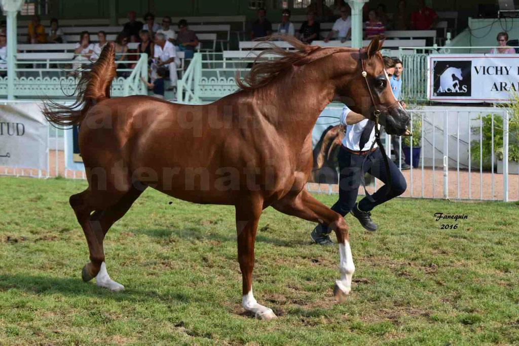 International Arabian Horse Show B de VICHY 2016 - DZHARI NUNKI - Notre Sélection - 17