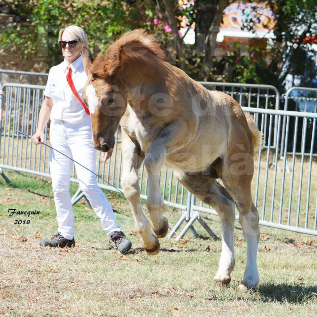 Fête du cheval à GRAULHET le 16 septembre 2018 - Concours Départemental de chevaux de traits - 6