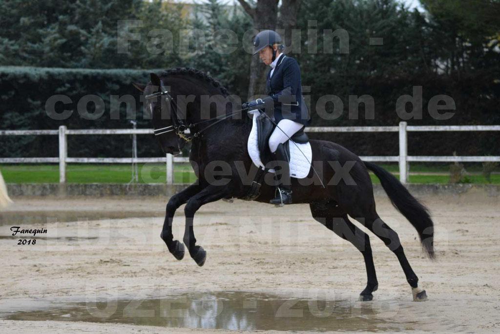 Confirmation de chevaux LUSITANIENS de Novembre 2018 - Étalon - GUADALQUIVIR