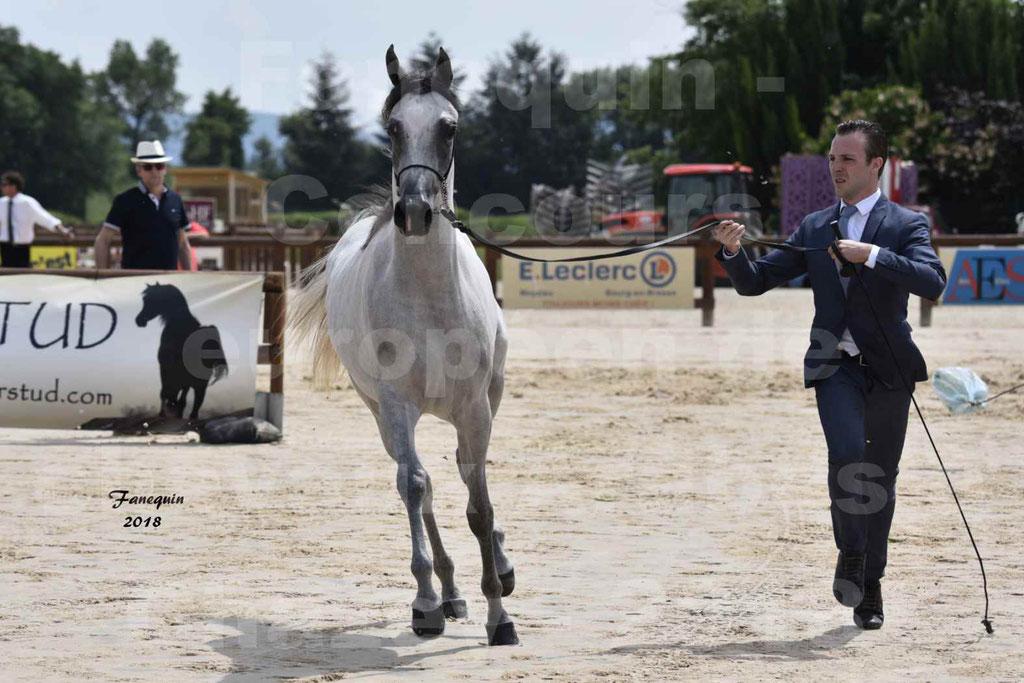 Concours Européen de chevaux Arabes à Chazey sur Ain 2018 - FATIN ALBIDAYER - Notre Sélection - 01