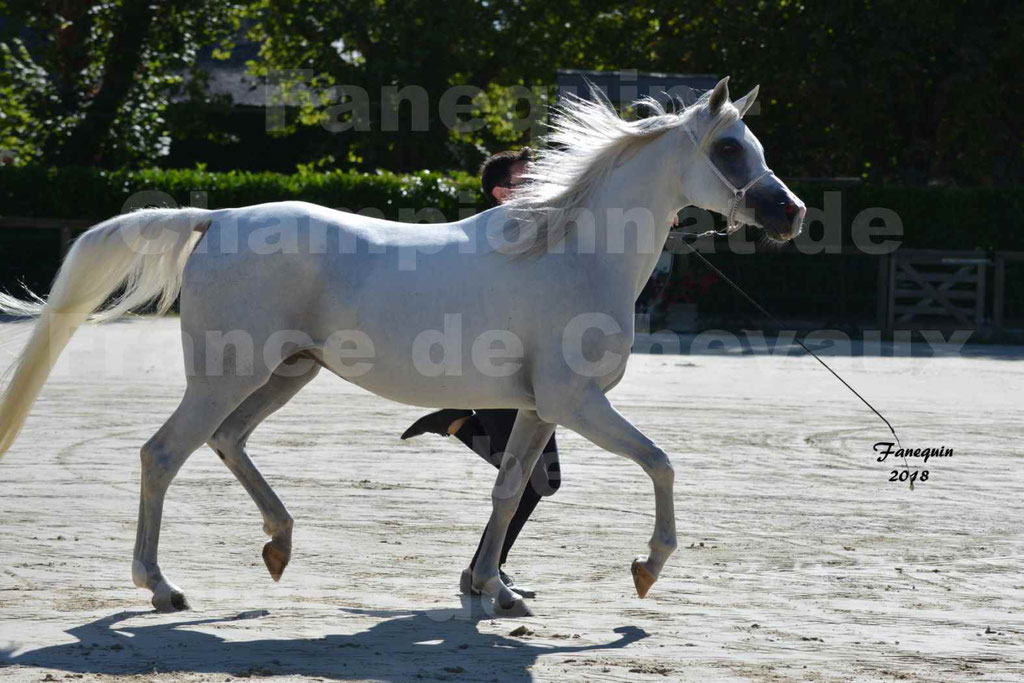 Championnat de FRANCE de chevaux Arabes à Pompadour en 2018 - ESTALIA - 25