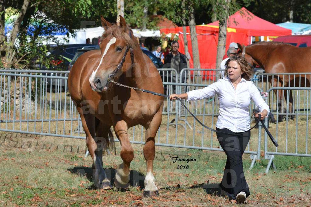 Fête du cheval à GRAULHET le 16 septembre 2018 - Concours Départemental de chevaux de traits - 57