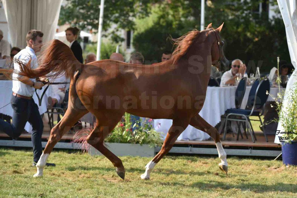 International Arabian Horse Show B de VICHY 2016 - DZHARI NUNKI - Notre Sélection - 40