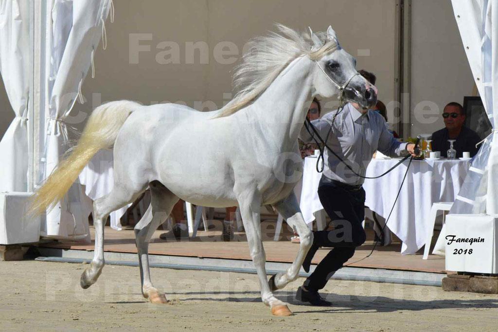 Championnat de FRANCE de chevaux Arabes à Pompadour en 2018 - ESTALIA - 06