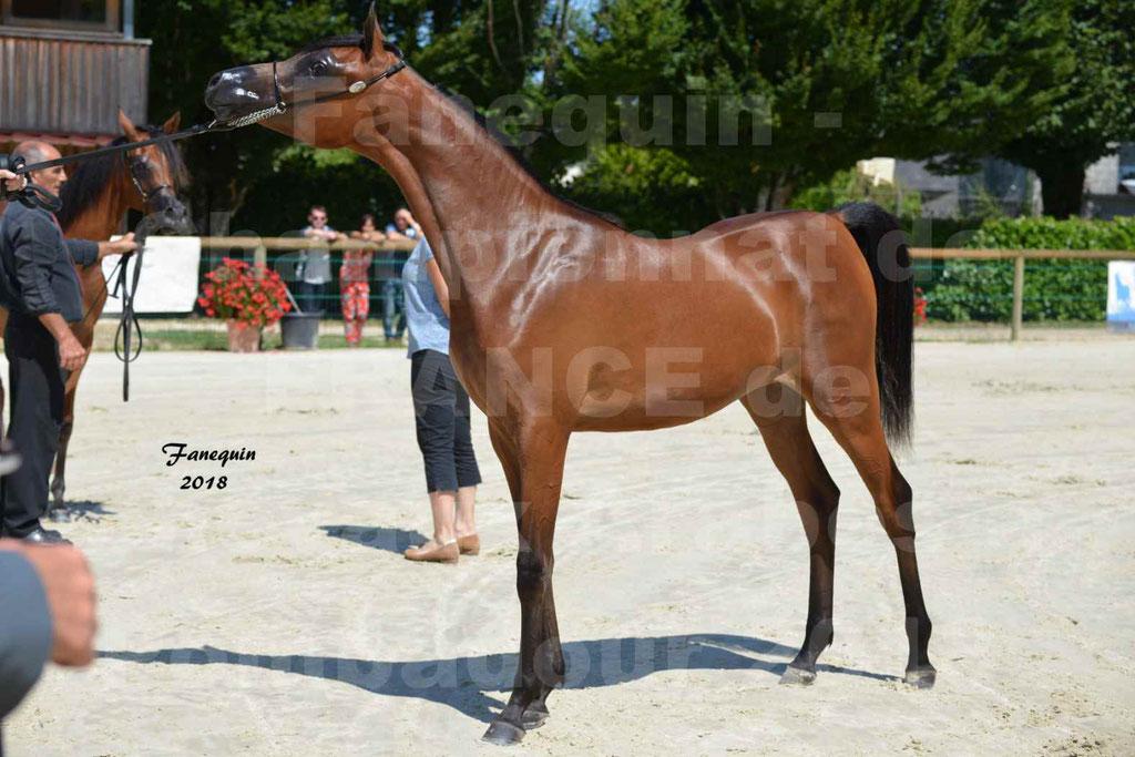 Championnat de FRANCE de chevaux Arabes à Pompadour en 2018 - BO AS ALEXANDRA - Notre Sélection - 13