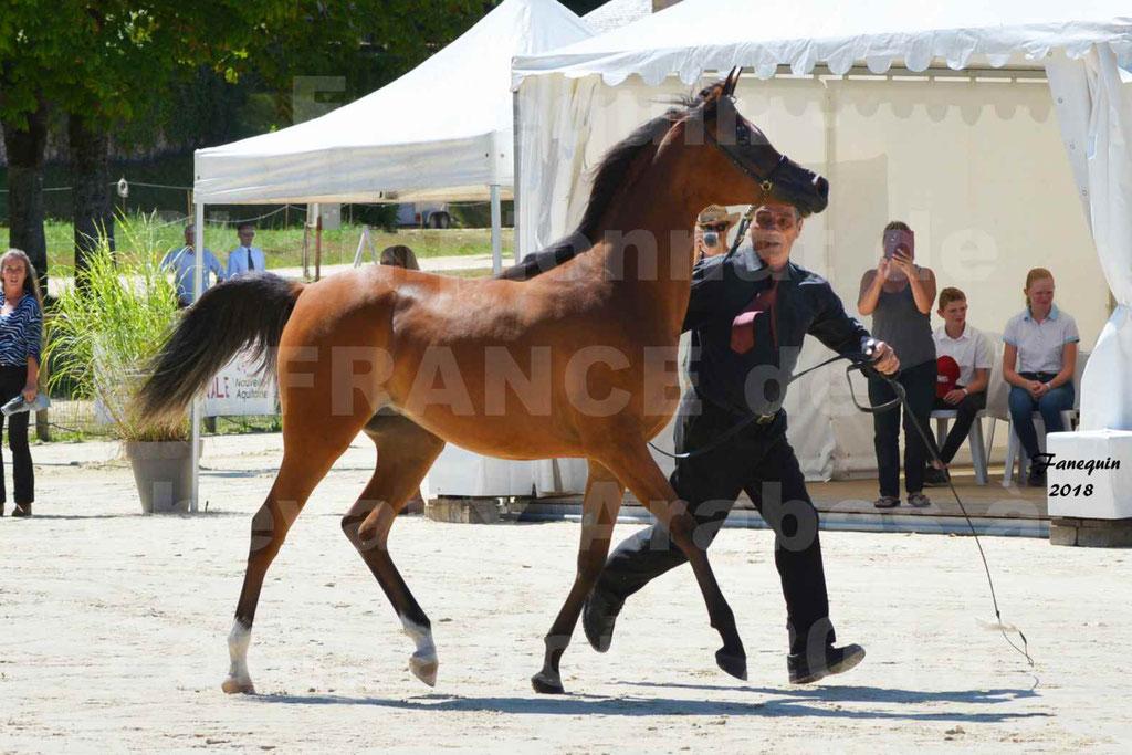 Championnat de FRANCE des chevaux Arabes à Pompadour en 2018 - SH CHARISMA - Notre Sélection - 09