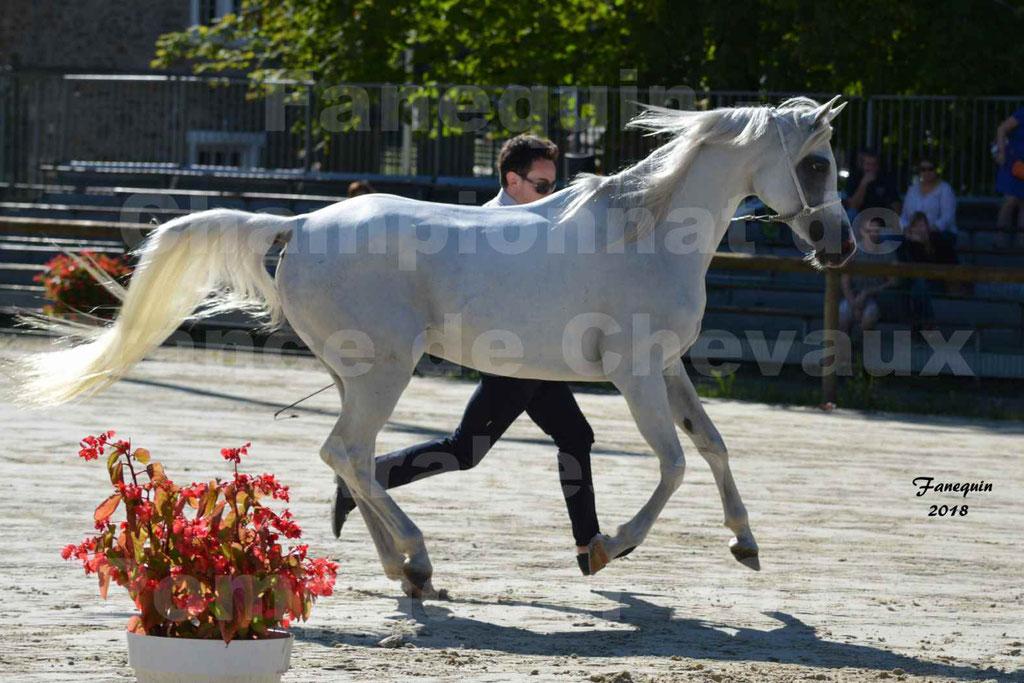 Championnat de FRANCE de chevaux Arabes à Pompadour en 2018 - ESTALIA - 29