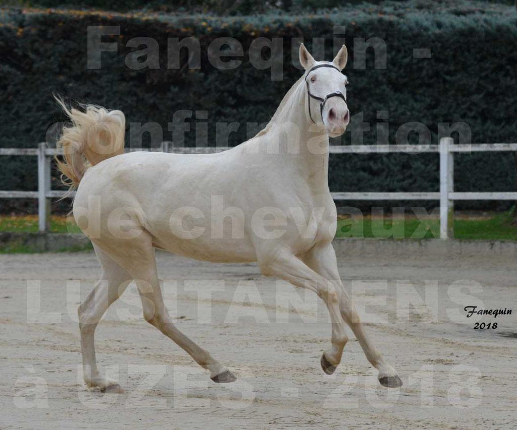 Confirmation de chevaux LUSITANIENS aux Haras d'UZES Novembre 2018 - LOLIBLOU - 21
