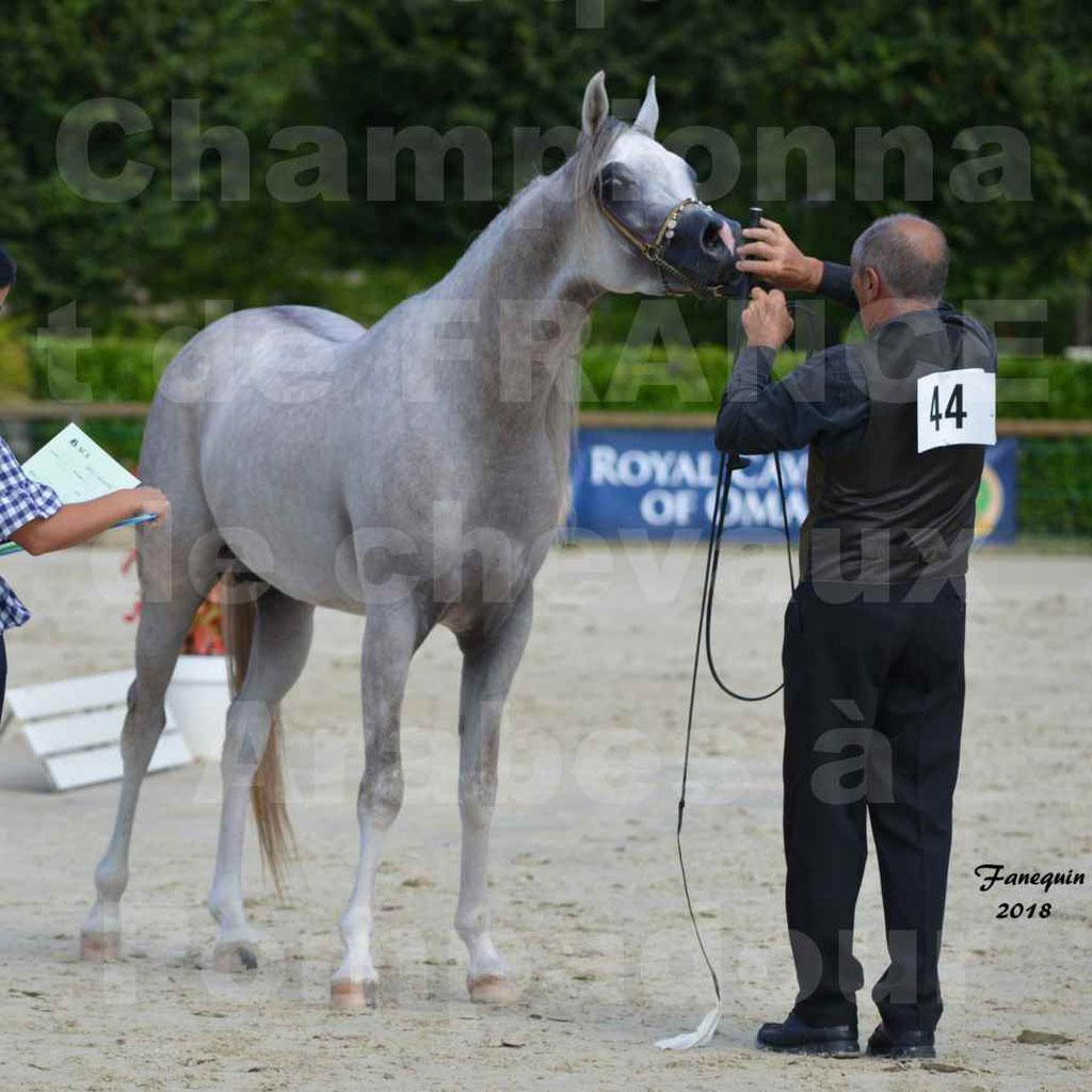 Championnat de FRANCE de chevaux Arabes à Pompadour en 2018 - SH CHAGALL - Notre Sélection - 14