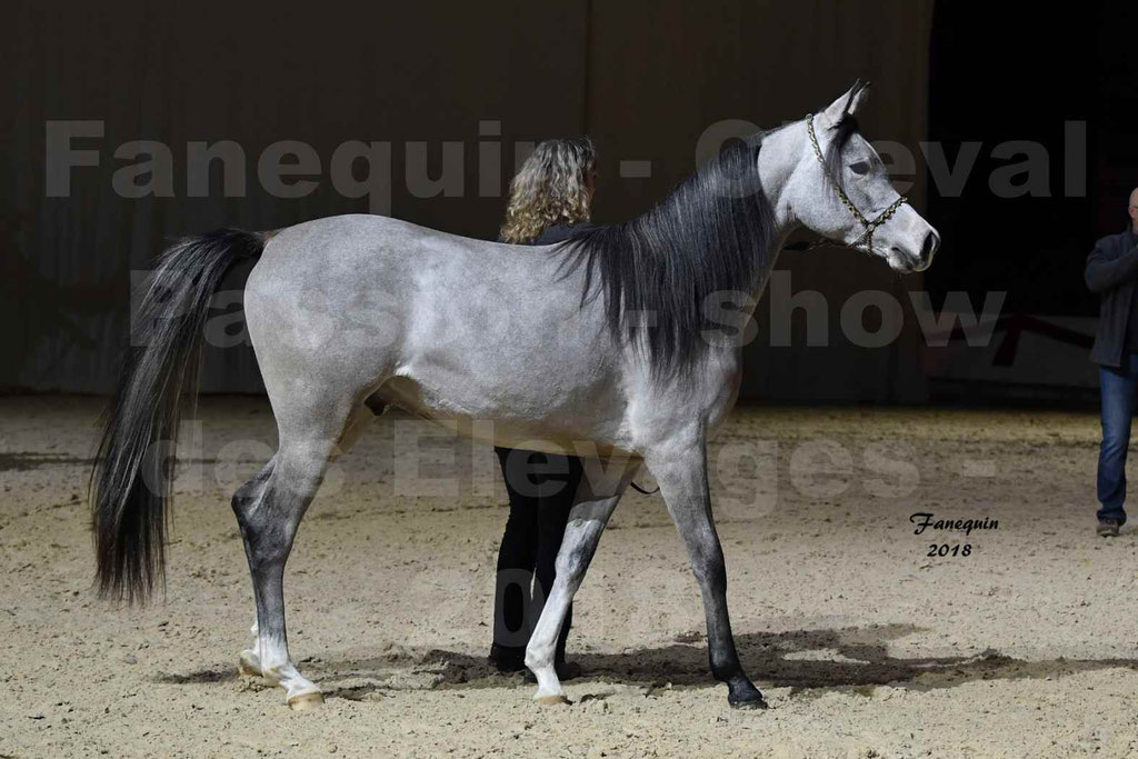 Cheval Passion 2018 - Show des Races - Cheval ARABES - en main