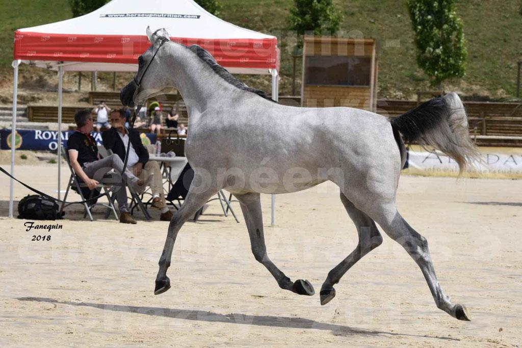 Concours Européen de chevaux Arabes à Chazey sur Ain 2018 - FATIN ALBIDAYER - Notre Sélection - 11