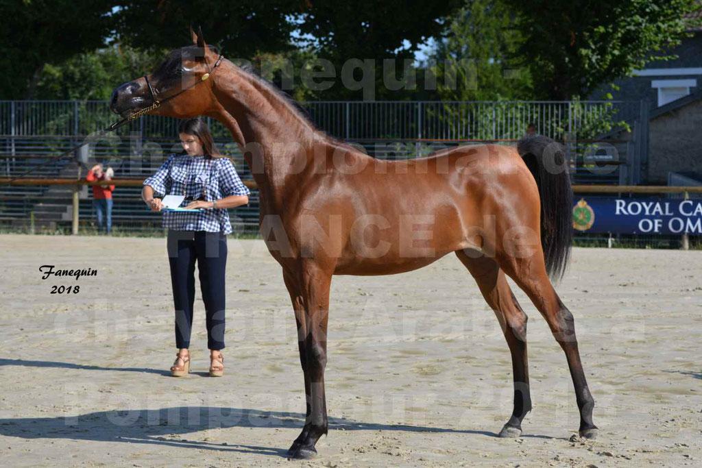 Championnat de FRANCE de chevaux Arabes à Pompadour en 2018 - BO AS ALEXANDRA - Notre Sélection - 50