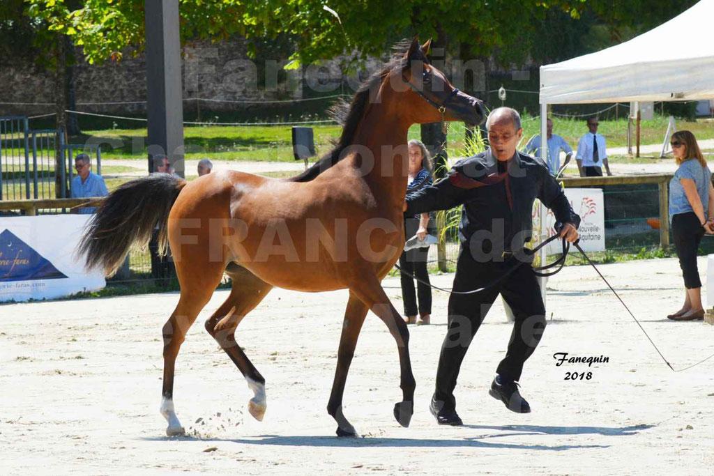 Championnat de FRANCE des chevaux Arabes à Pompadour en 2018 - SH CHARISMA - Notre Sélection - 08