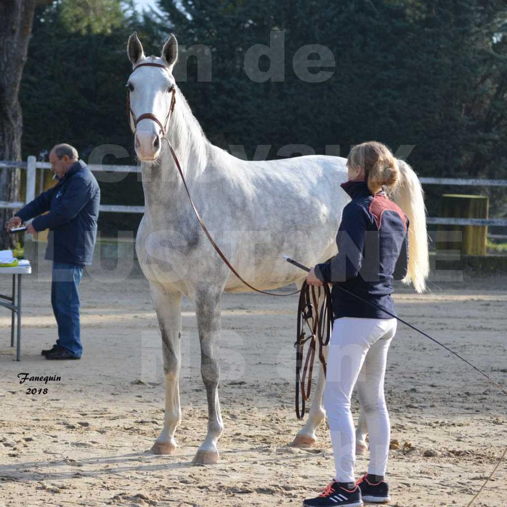 Confirmation de chevaux LUSITANIENS aux Haras d'UZES Novembre 2018 - LUTECE DU CASTEL - 02