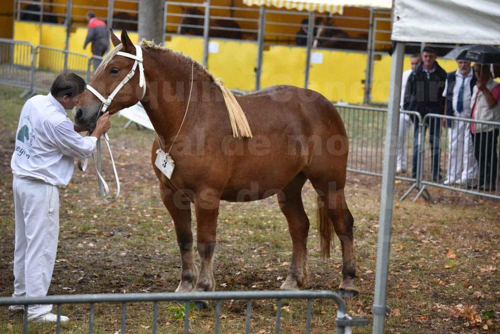 Concours Régional de chevaux de traits en 2017 - Trait COMTOIS - FIDJY DE GRILLOLES - 03