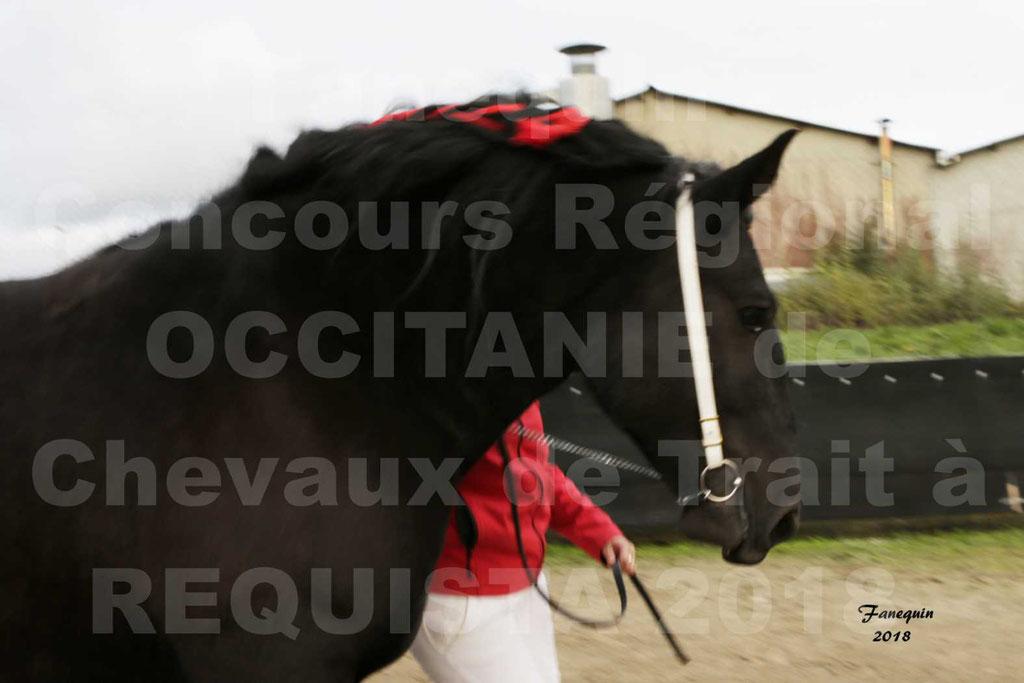 """Concours Régional """"OCCITANIE"""" Modèles et Allures de chevaux de trait à REQUISTA en 2018 - PORTRAITS - 32"""