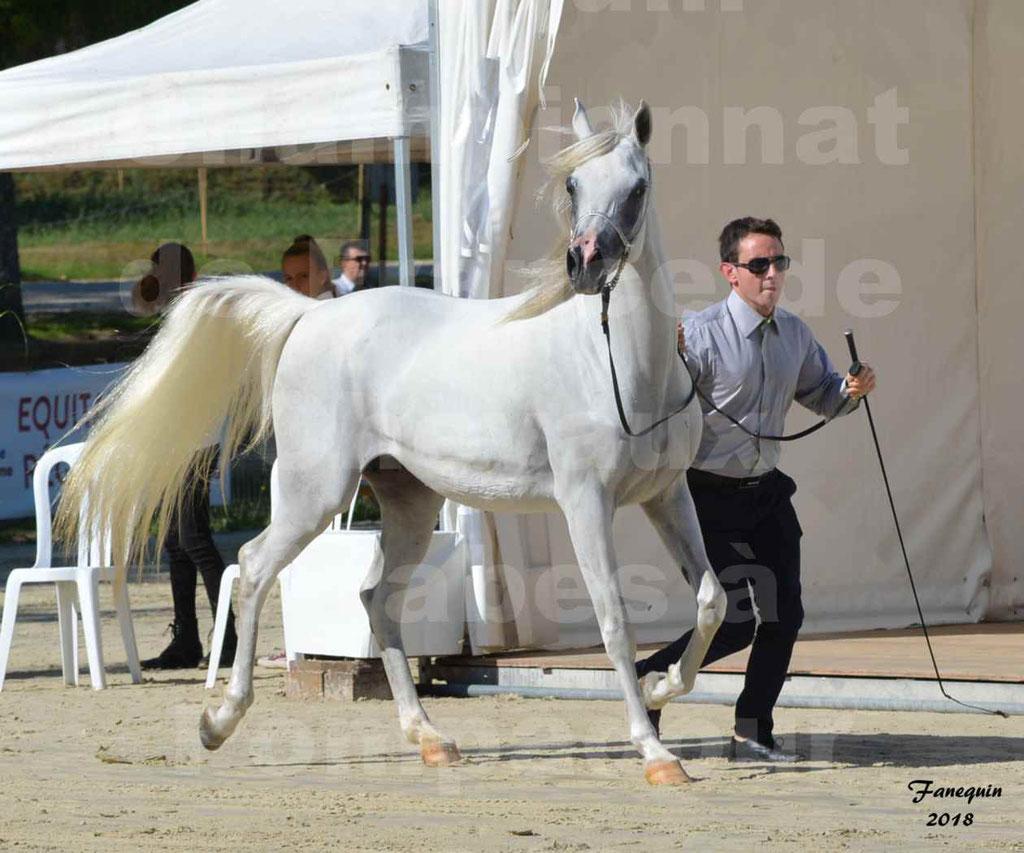 Championnat de FRANCE de chevaux Arabes à Pompadour en 2018 - ESTALIA - 03