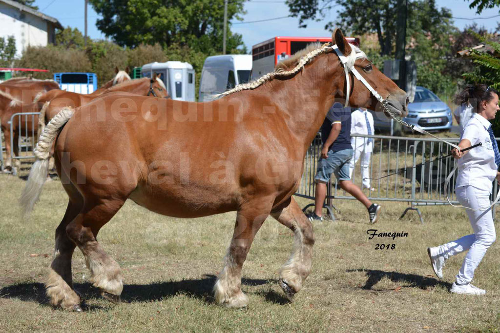 Fête du cheval à GRAULHET le 16 septembre 2018 - Concours Départemental de chevaux de traits - 47