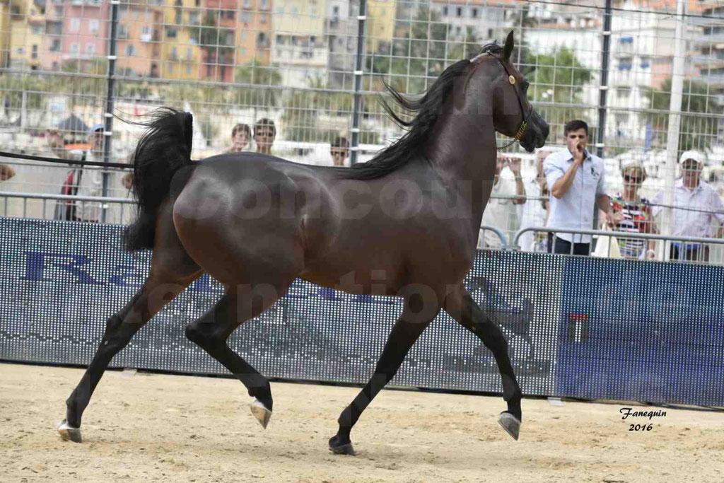 Championnat du pur-sang arabe de la Méditerranée et des pays arabes - MENTON 2016 - EKS ALIHANDRO - Notre Sélection - 22