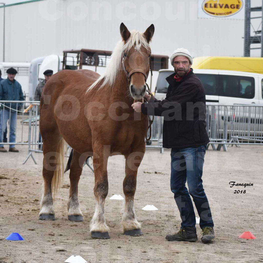 Concours Label Loisirs lors du concours Régional de chevaux de traits à REQUISTA en Octobre 2018 - 11