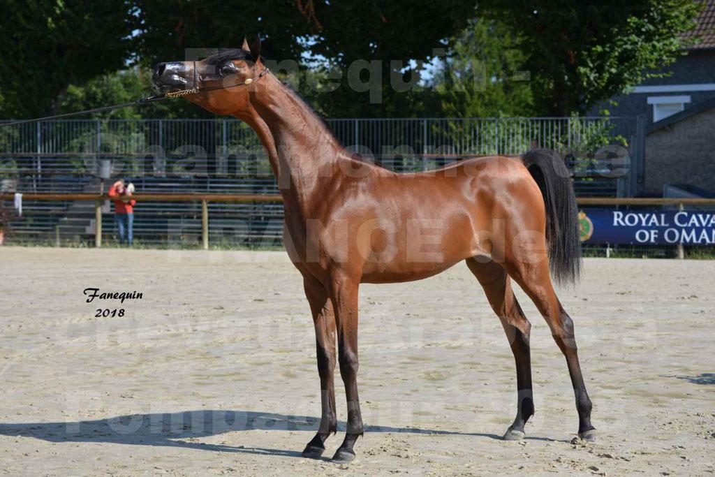 Championnat de FRANCE de chevaux Arabes à Pompadour en 2018 - BO AS ALEXANDRA - Notre Sélection - 48