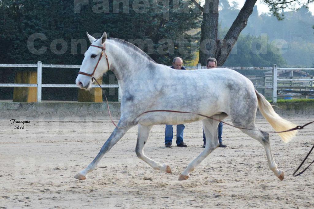 Confirmation de chevaux LUSITANIENS aux Haras d'UZES Novembre 2018 - LUTECE DU CASTEL - 21