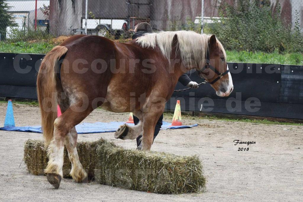 Concours Label Loisirs lors du concours Régional de chevaux de traits à REQUISTA en Octobre 2018 - 18