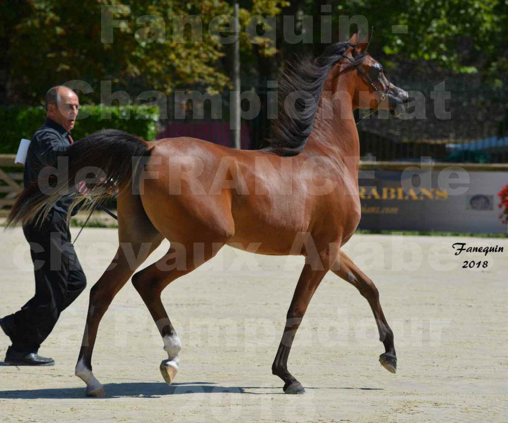 Championnat de FRANCE des chevaux Arabes à Pompadour en 2018 - SH CHARISMA - Notre Sélection - 30